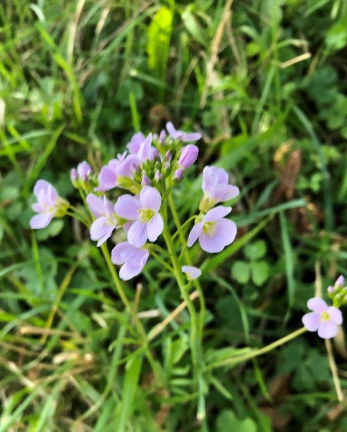 verge flowers